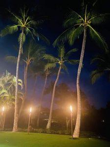 Yard At Night - Maui - Hawaii